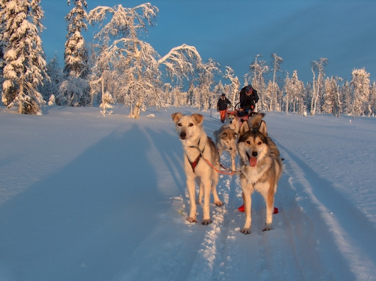 Winterlandschaft in Lappland 2