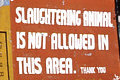 slaughtering animals not allowed